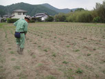 肥しが、雨とか風に流されないように、一つずつ土をかけていきます。