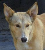 Leila - in Deutschland adoptiert!