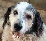 Marius - in der Schweiz adoptiert!