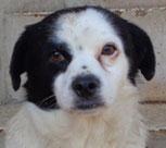 Rudi - in Deutschland adoptiert!