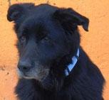 Erison - in der Schweiz adoptiert!
