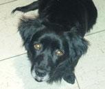 Rona - wurde in Deutschland adoptiert!