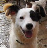 Arya - jetzt Kiwi - voll im Hundeglück!