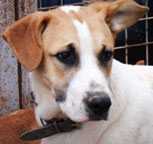 Rufus - in der Schweiz adoptiert!