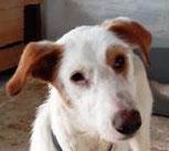 Belfy - in Spanien adoptiert!