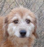 Lili - in der Schweiz adoptiert!