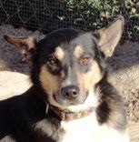 Baxter - in Deutschland adoptiert!