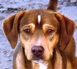 Cloy - in der Schweiz adoptiert!