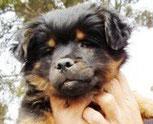 Chewaka - in Spanien adoptiert!