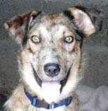 Teemu - in der Schweiz adoptiert!