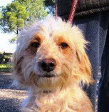 Gilda - in Spanien adoptiert!