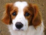 Valero - in der Schweiz adoptiert!