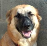 Daniella - in Spanien adoptiert!