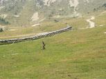 гид в Пиренеях, экскурсии в Пиренейских горах, пиренейские горы, туры по пиренеям