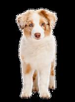 Hundeschule Bremen - Ihre Hundeschule MOMO in Bremen - Ihre Welpenschule in Bremen