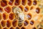 L'Abeille Ossaloise- miel de montagne -Sainte Colomme partenaire avec l'ACCOB