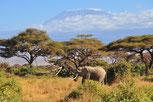 Парк Амбосели и Килиманджаро