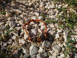 Hundehaararmband