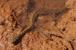 Snake | Portugal