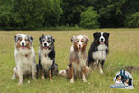 hell blue merle, dark blue merle, red merle und black tri