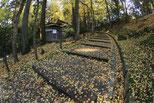 第15回「成田山公園紅葉まつり」