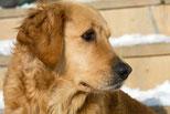 Hundeportrait, Foto: ©wjarek, Fotalia
