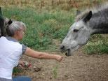 Soins animaux et communication animale à Agen, Bon-Encontre (47 - Lot et Garonne - Aquitaine)
