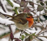 Things we can do for Wildlife in winter