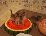 子猫同士の遊び場