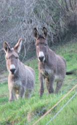 Oh ! deux ânes vous observent ...