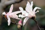 早春の花一覧
