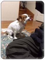 ストレスをうけた後の犬
