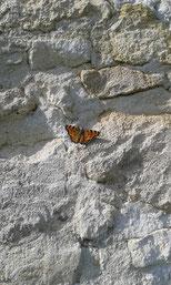 Schmetterling auf einer Mauer