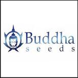 buddha seeds - semi da collezione