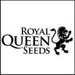 royal queen seeds - semi da collezione