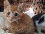 Augenextraktion wird sich bei einigen Kitten wahrscheinlich nicht vermeiden lassen