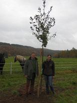 Pflanzaktion Baum des Jahres Trauben-Eiche
