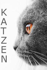 Website über Katzen, Bildquelle: fotolia.com