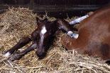 Pferdepraxis München Gynäkologie Zucht