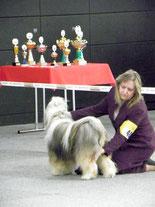 Ike vom Kawa Karpo Tibet Terrier Rüde