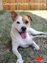Artgerechtes Naturfutter von Reico Vital. Gesunde Ernährung von Hunden mit Vertriebspartner Ronny Rißmann