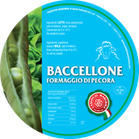 maremma sheep sheep's cheese dairy pecorino caseificio tuscany tuscan spadi follonica label italian origin milk italy fresh soft tender fragile baccellone