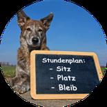 Termine Hundeschule München