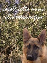 オリ―ブ農園の番犬
