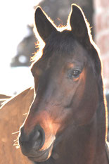 Pferdesachverständige Gutachten Pferde Sachverständige Gutachter Hippologe Versicherung Haftpflicht Schaden