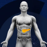 Dietary Fiber: an Update on Fiber