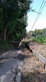 台風15号の爪痕 八街市 被害 倒木
