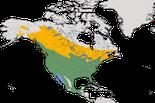 Karte zur Verbreitung des Rotschulterstärling (Agelaius phoeniceus), weltweit.