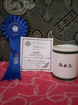 тайский_риджбек,выставка,чемпион,победитель,питомник,thairidgeback_dog,show,tartu,winner,mani_daeng_kennel