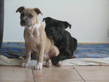 Témoignage Éducation canine dressage Charente Maritime (11) tiken)